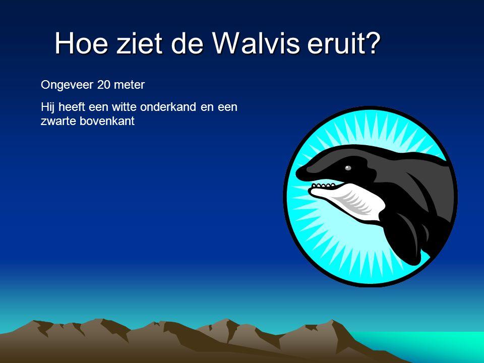 Hoe ziet de Walvis eruit