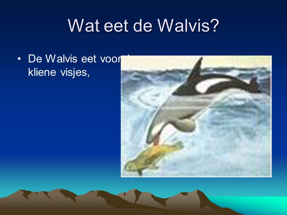 Wat eet de Walvis De Walvis eet vooral, kliene visjes,