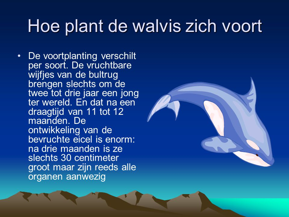 Hoe plant de walvis zich voort