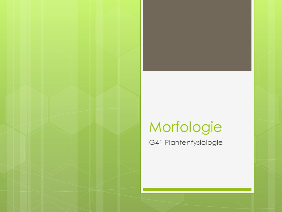 Morfologie G41 Plantenfysiologie