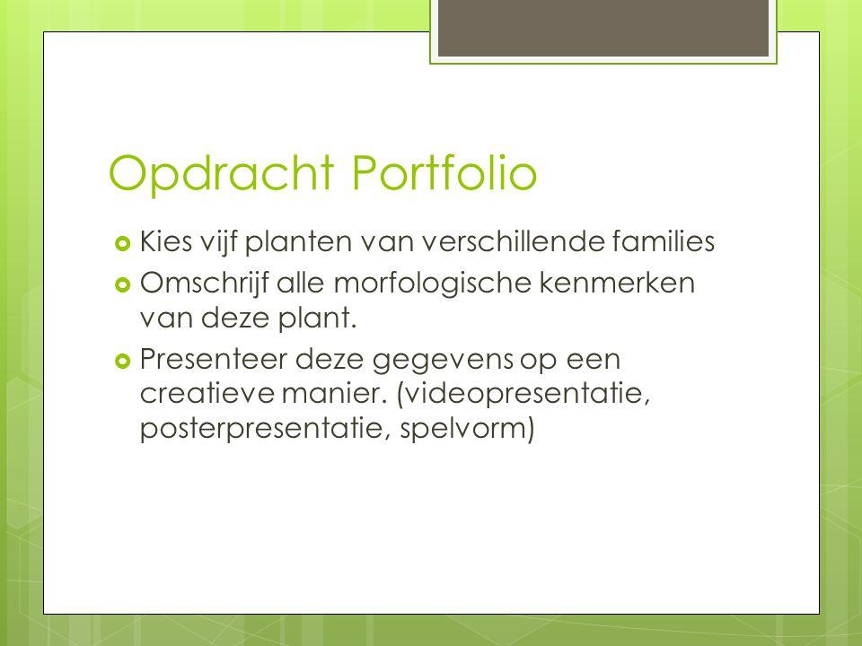 Opdracht Portfolio Kies vijf planten van verschillende families