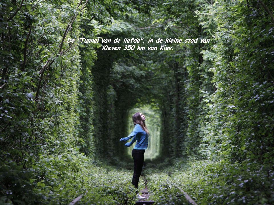 De Tunnel van de liefde , in de kleine stad van Kleven 350 km van Kiev.