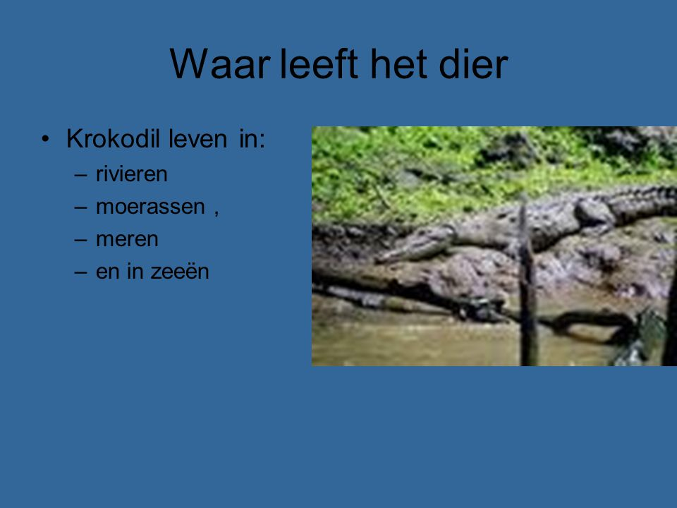 Waar leeft het dier Krokodil leven in: rivieren moerassen , meren