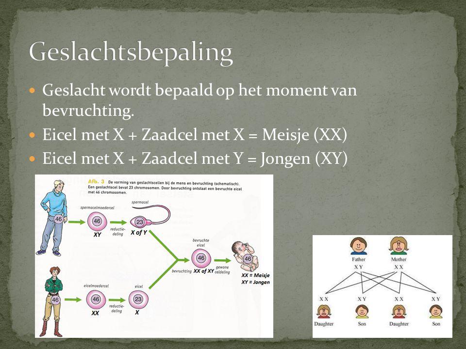 Geslachtsbepaling Geslacht wordt bepaald op het moment van bevruchting. Eicel met X + Zaadcel met X = Meisje (XX)