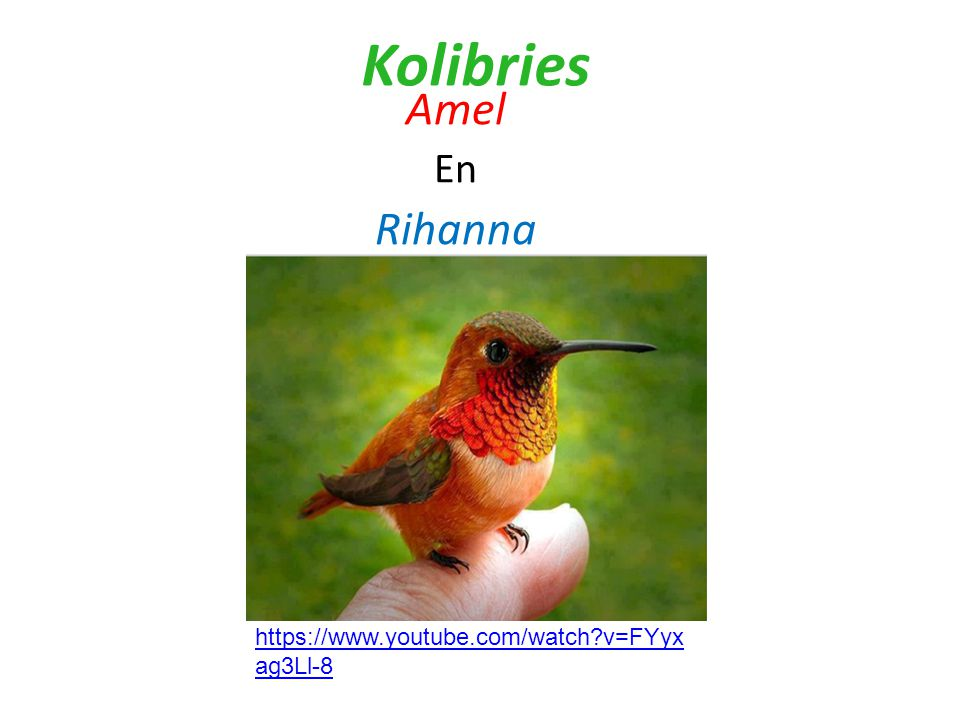 Kolibries Amel En Rihanna https://www.youtube.com/watch v=FYyxag3Ll-8