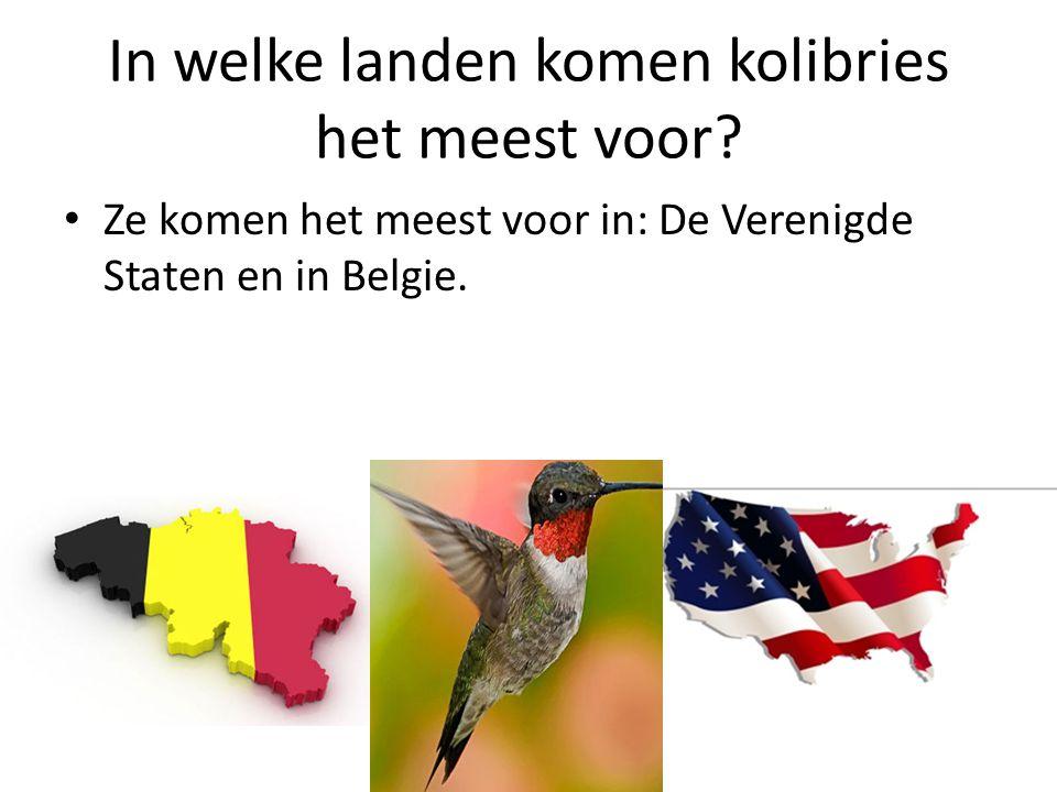 In welke landen komen kolibries het meest voor