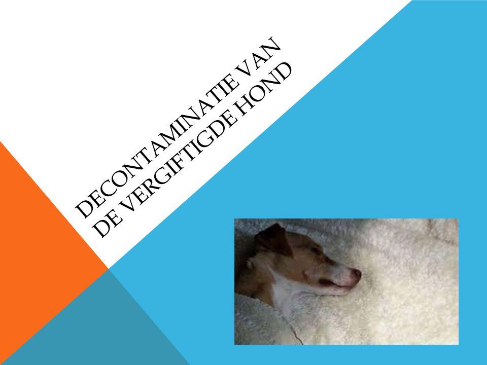 Decontaminatie van de vergiftigde hond