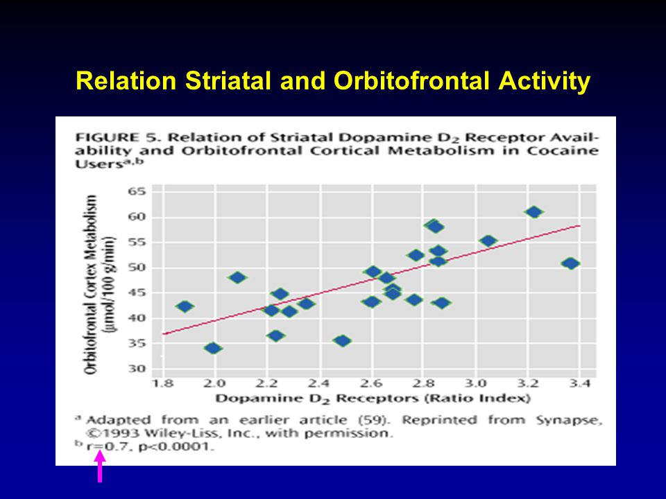 Relation Striatal and Orbitofrontal Activity