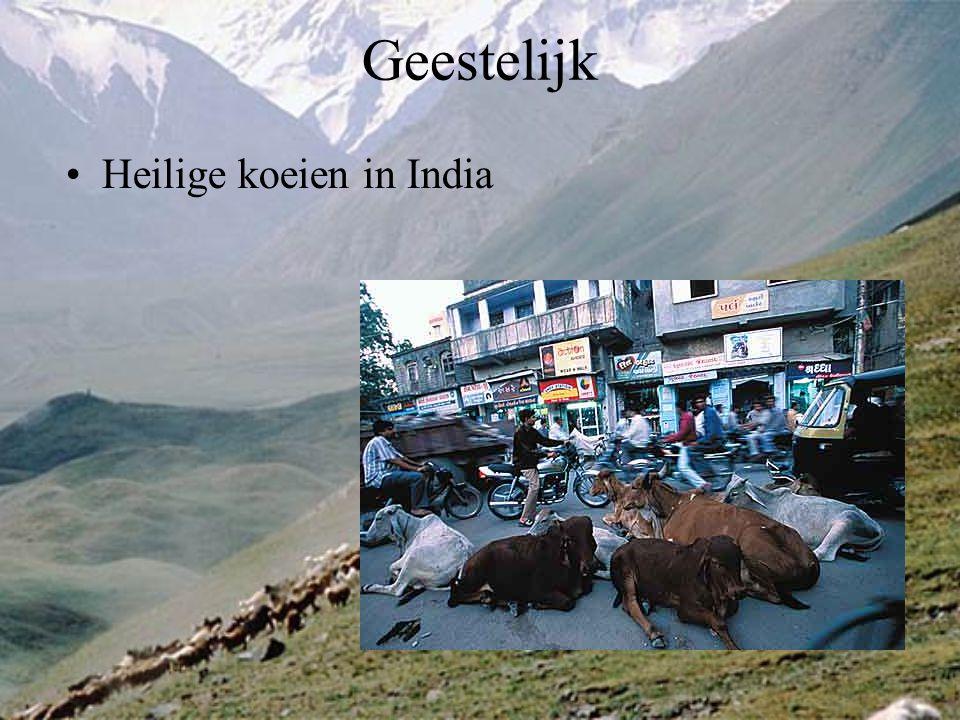 Geestelijk Heilige koeien in India
