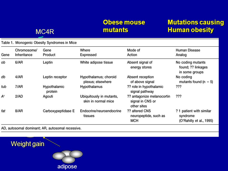 AC Gs + Obese mouse mutants MC4-/- POMC -/- db/db ob/ob