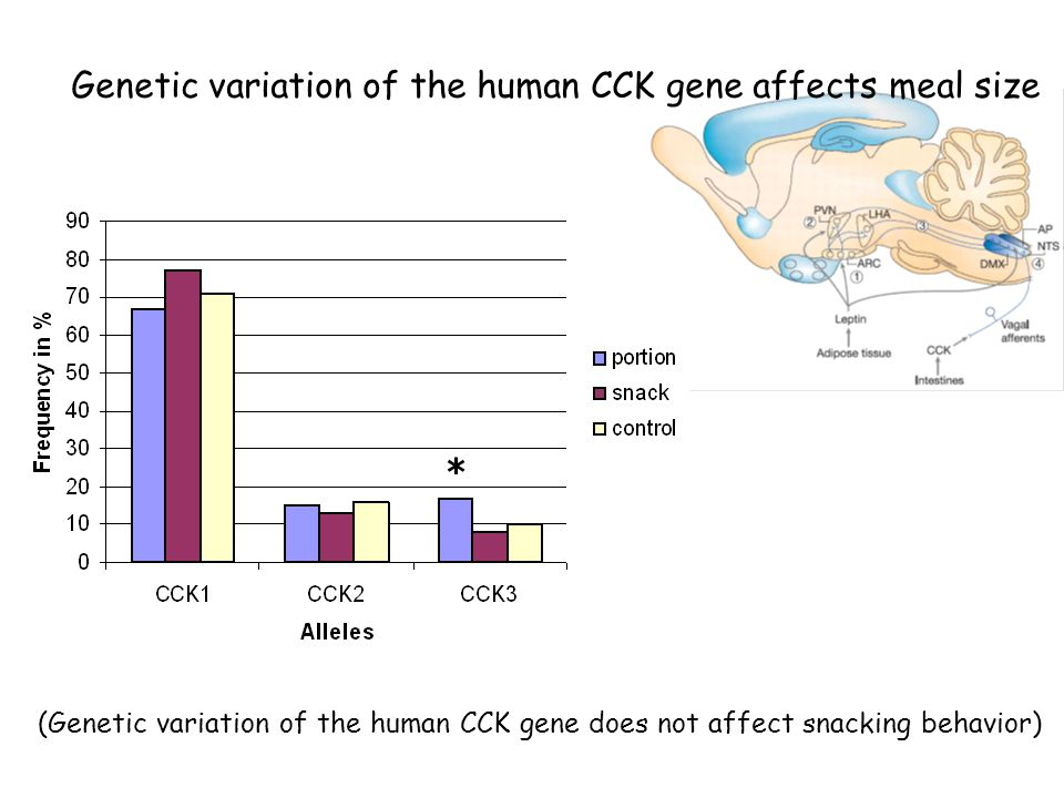 Genetic variation of the human CCK gene affects meal size