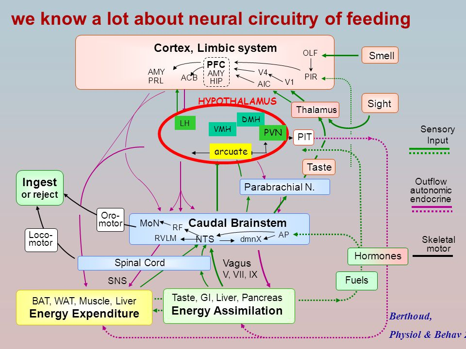we know a lot about neural circuitry of feeding