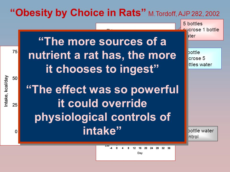 Obesity by Choice in Rats M.Tordoff, AJP 282, 2002