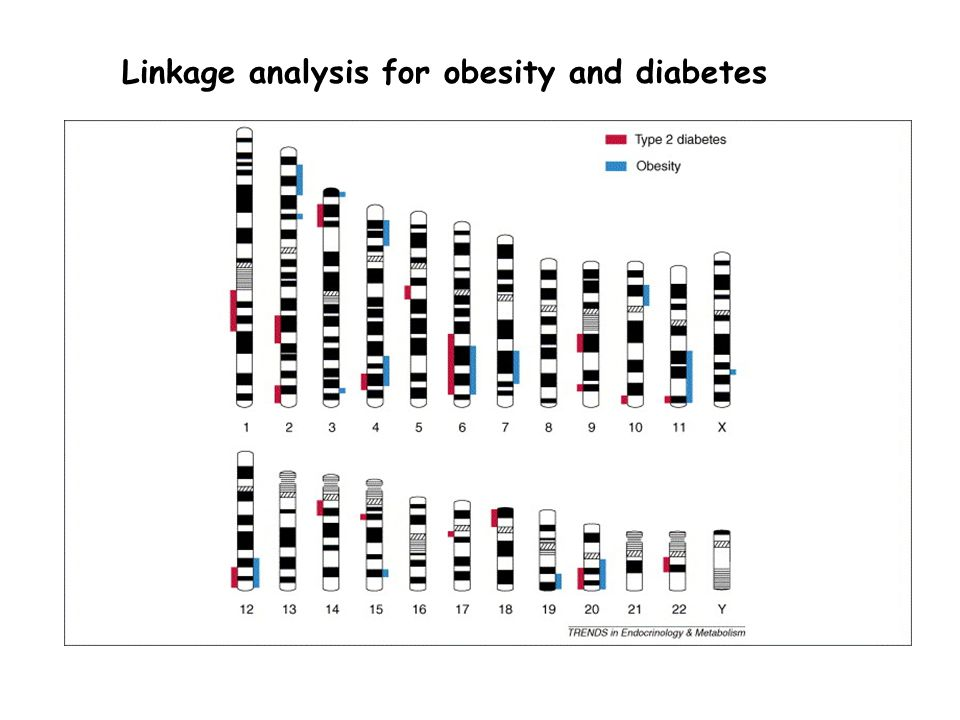 Linkage analysis for obesity and diabetes