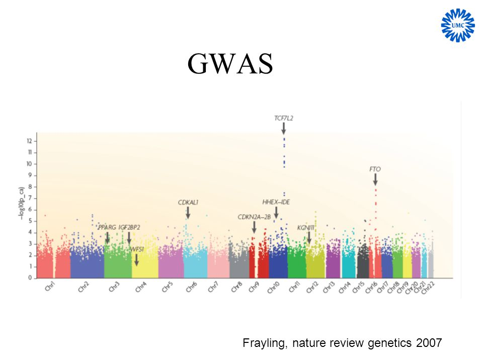 GWAS Frayling, nature review genetics 2007
