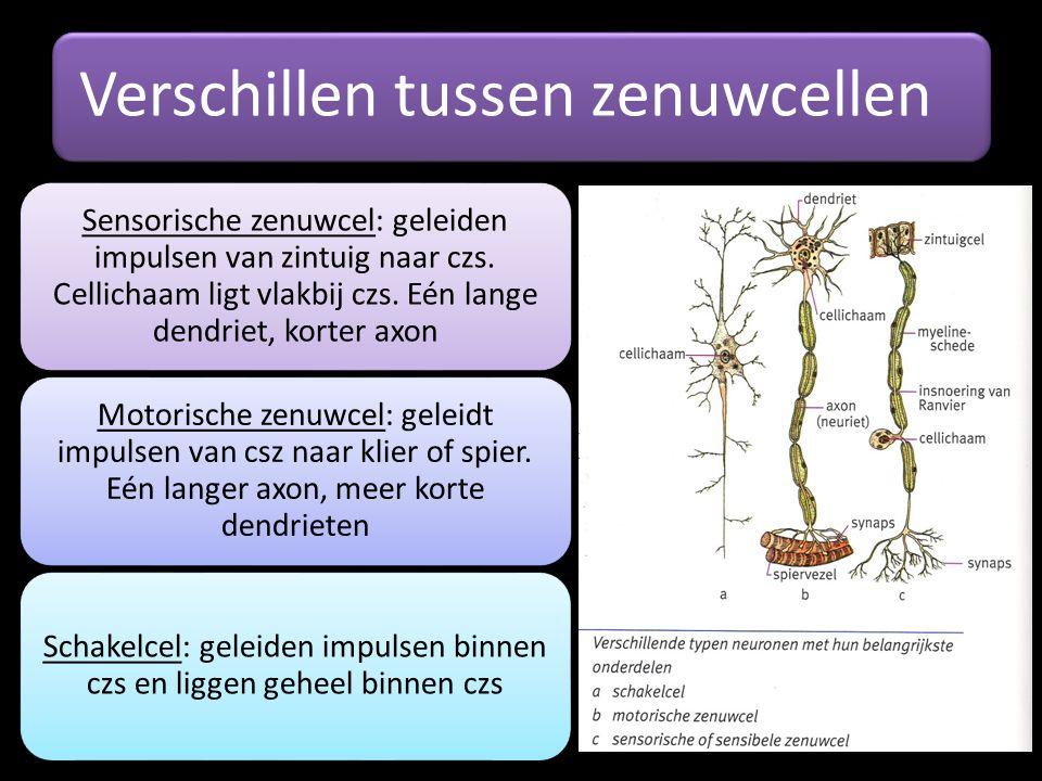 Schakelcel: geleiden impulsen binnen czs en liggen geheel binnen czs