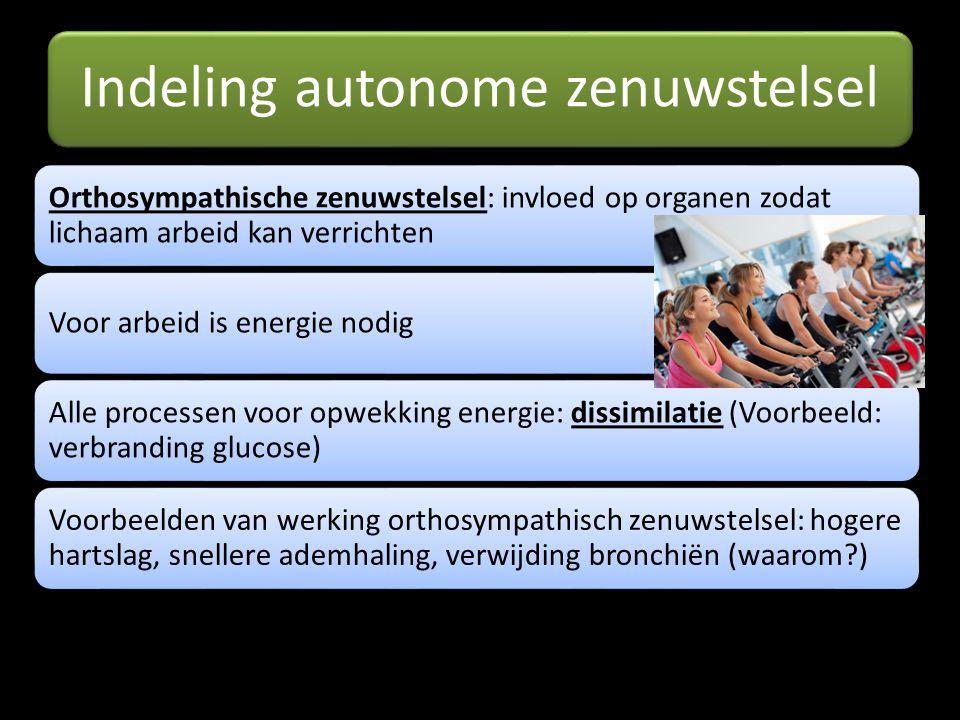 Indeling autonome zenuwstelsel