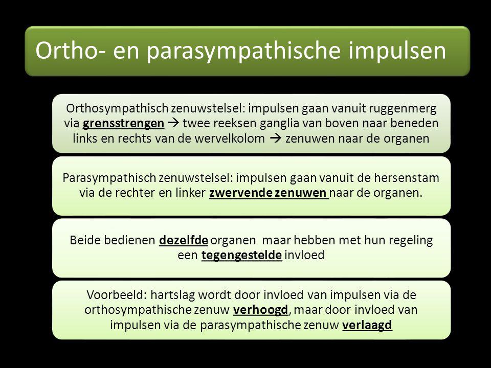 Ortho- en parasympathische impulsen