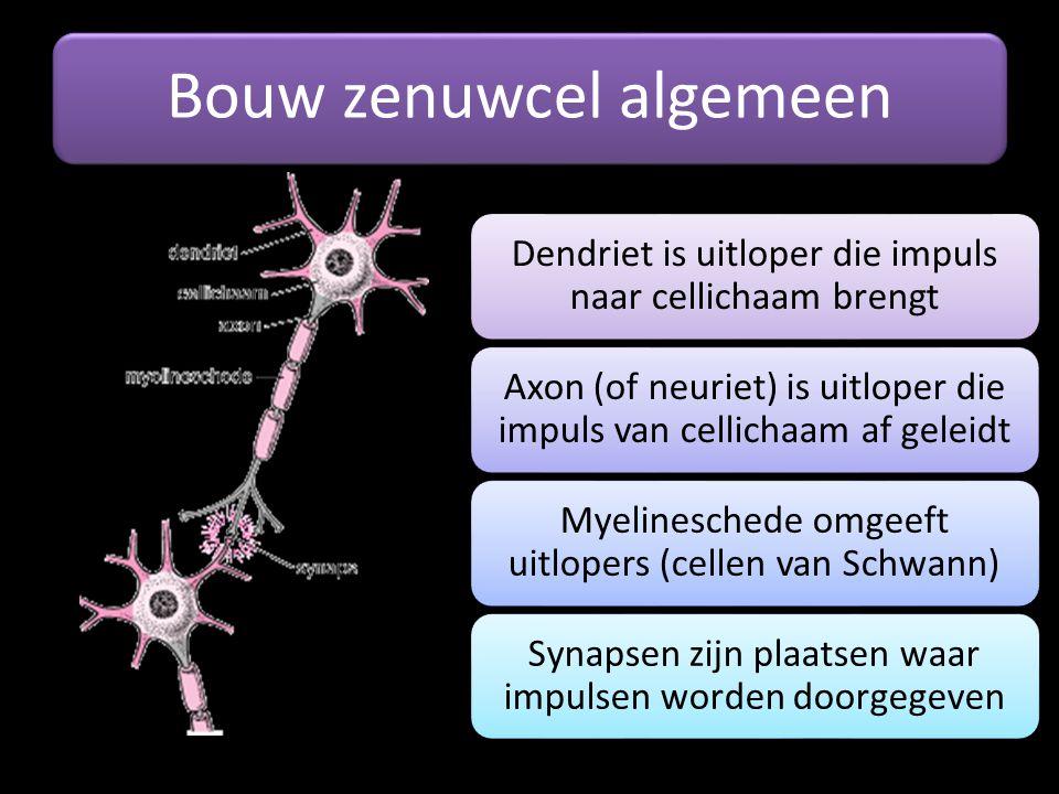 Bouw zenuwcel algemeen