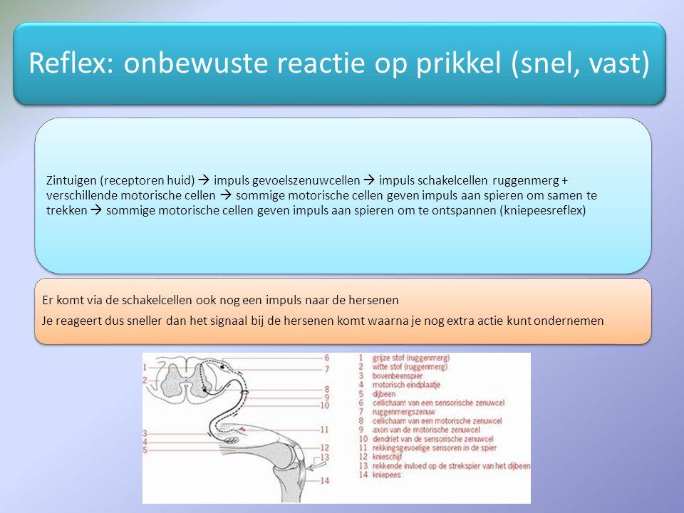 Reflex: onbewuste reactie op prikkel (snel, vast)