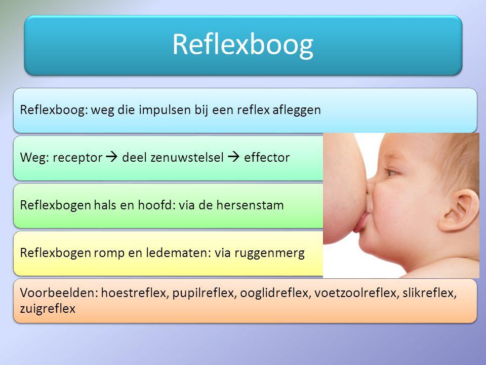 Reflexboog Reflexboog: weg die impulsen bij een reflex afleggen