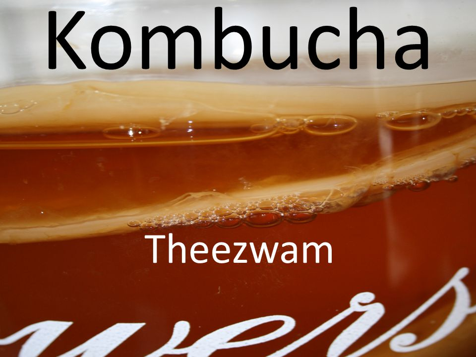 Kombucha Theezwam