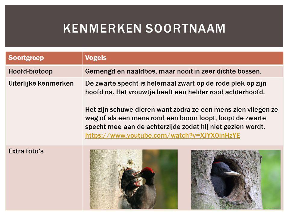 Kenmerken soortnaam Soortgroep Vogels Hoofd-biotoop