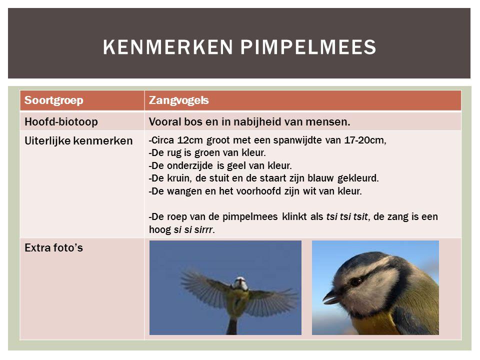 Kenmerken pimpelmees Soortgroep Zangvogels Hoofd-biotoop