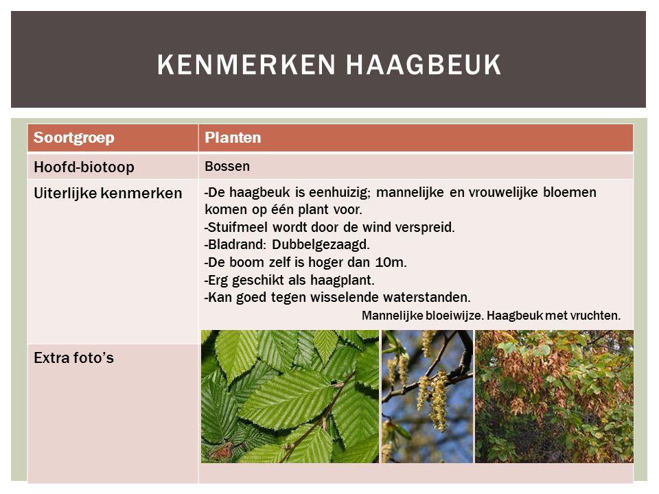 Kenmerken haagbeuk Soortgroep Planten Hoofd-biotoop