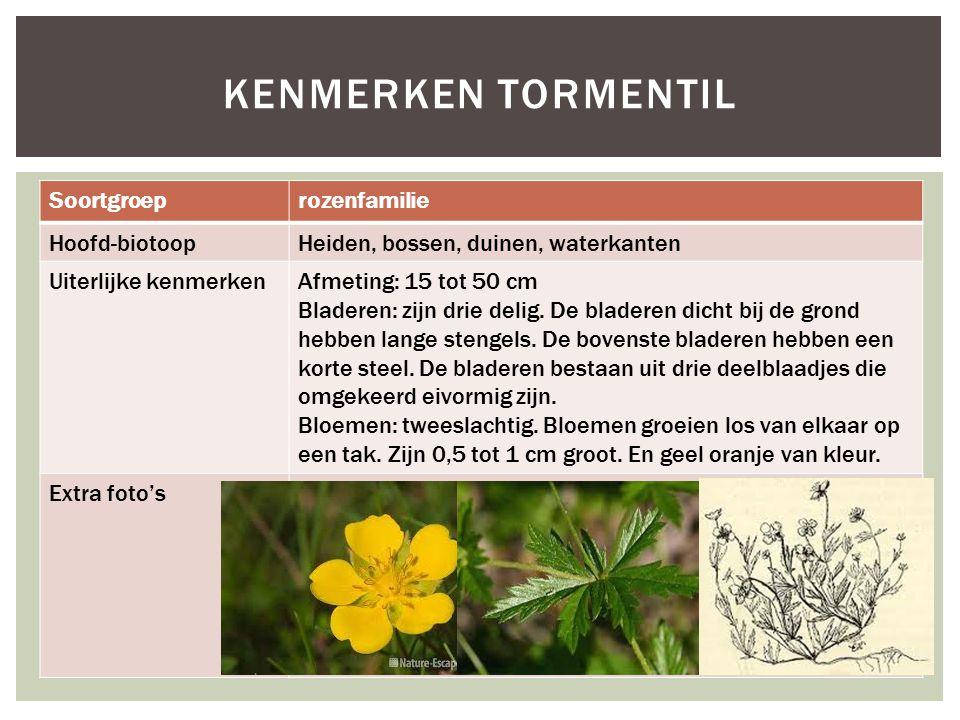 Kenmerken tormentil Soortgroep rozenfamilie Hoofd-biotoop