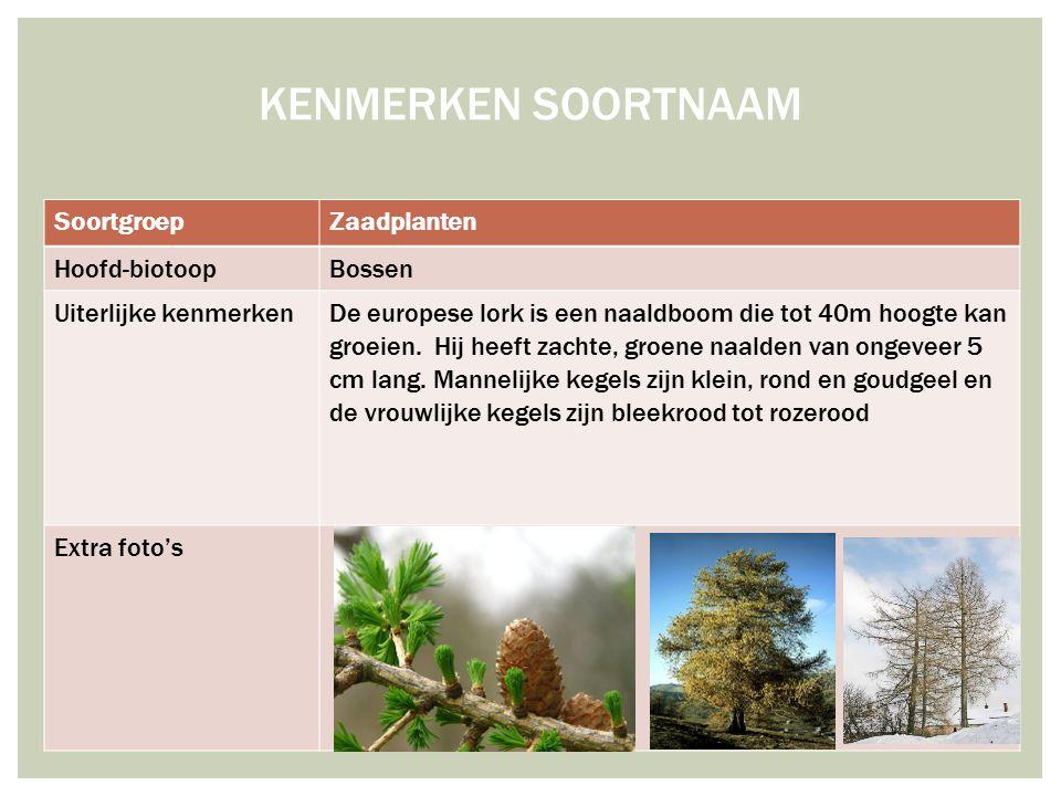 KENMERKEN SOORTNAAM Soortgroep Zaadplanten Hoofd-biotoop Bossen