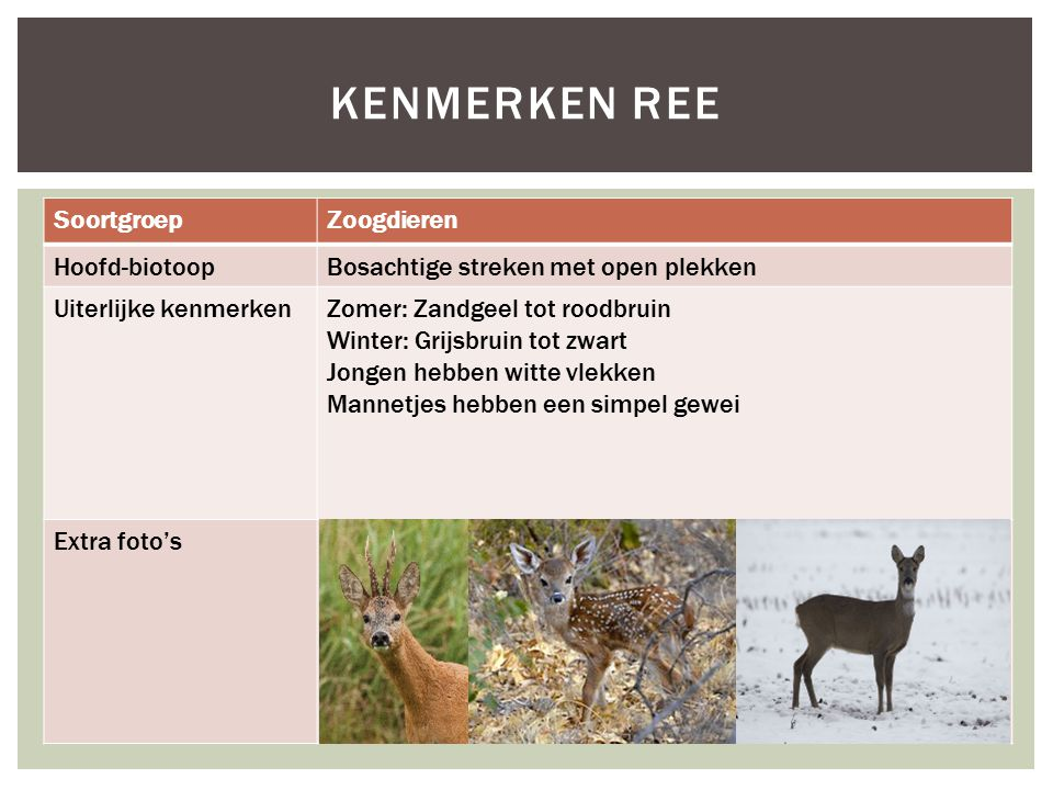 Kenmerken ree Soortgroep Zoogdieren Hoofd-biotoop
