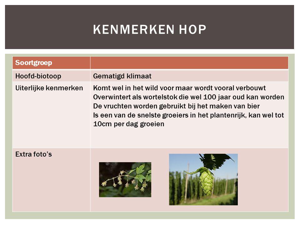 Kenmerken hop Soortgroep Hoofd-biotoop Gematigd klimaat