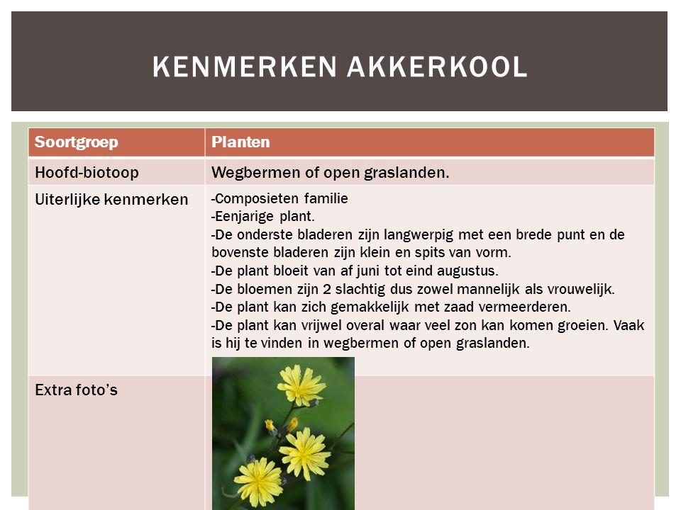 Kenmerken Akkerkool Soortgroep Planten Hoofd-biotoop