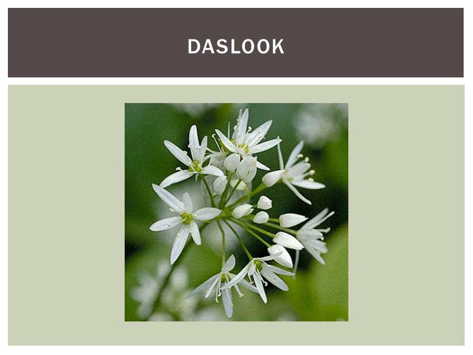 DASlook