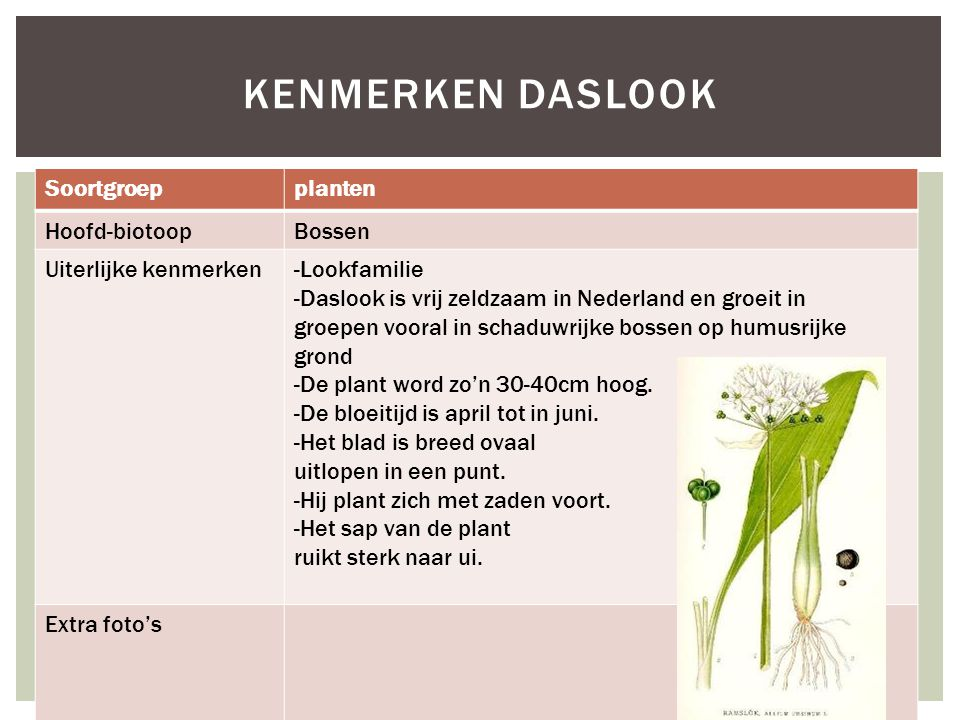 Kenmerken daslook Soortgroep planten Hoofd-biotoop Bossen