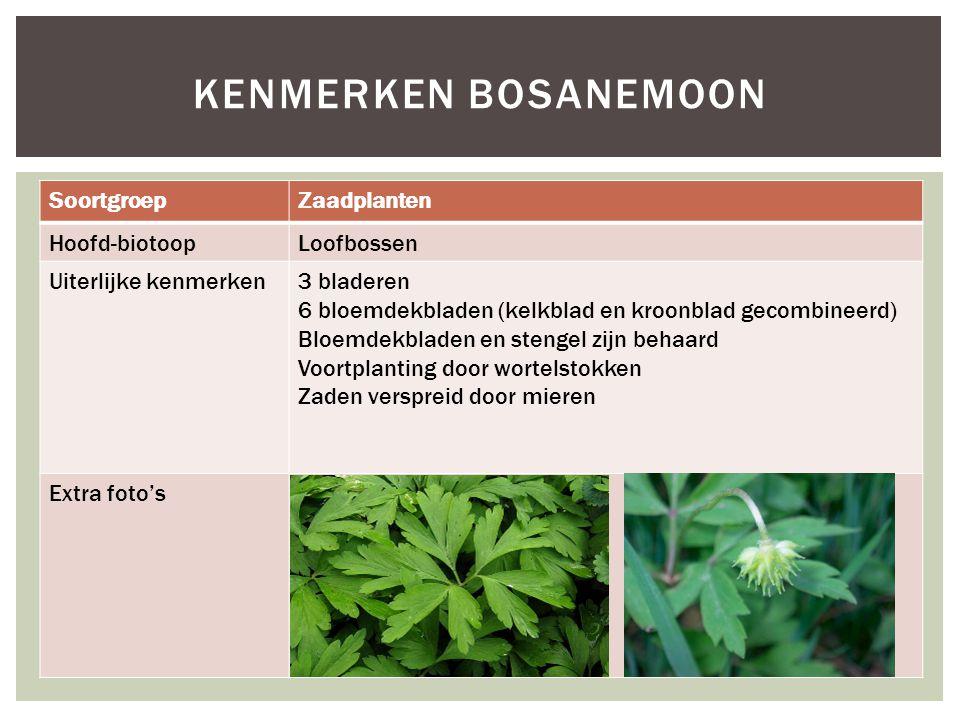 Kenmerken bosanemoon Soortgroep Zaadplanten Hoofd-biotoop Loofbossen