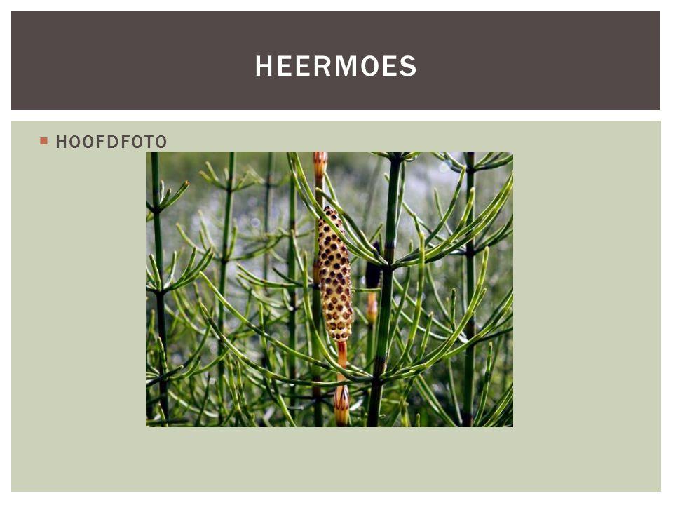Heermoes HOOFDFOTO