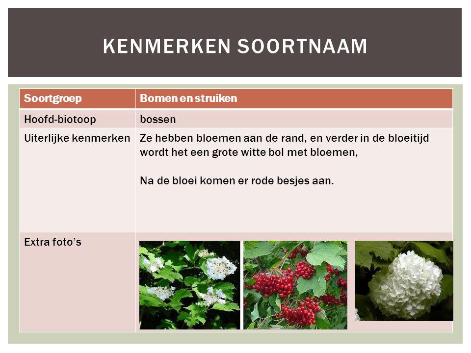 Kenmerken soortnaam Soortgroep Bomen en struiken Hoofd-biotoop bossen