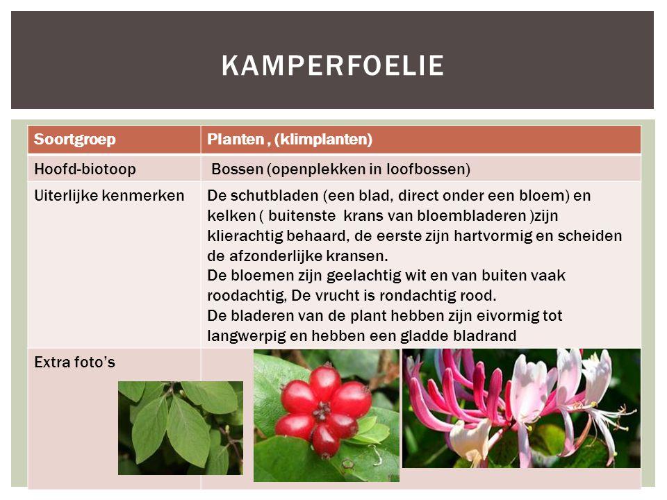 kamperfoelie Soortgroep Planten , (klimplanten) Hoofd-biotoop