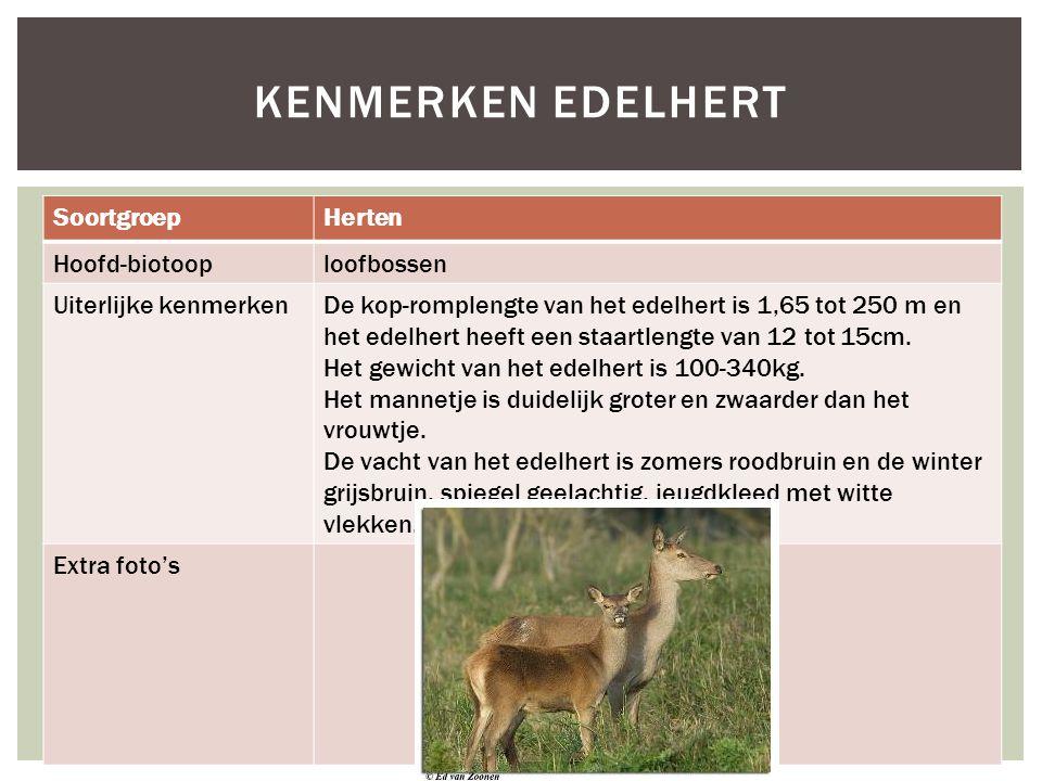 Kenmerken Edelhert Soortgroep Herten Hoofd-biotoop loofbossen