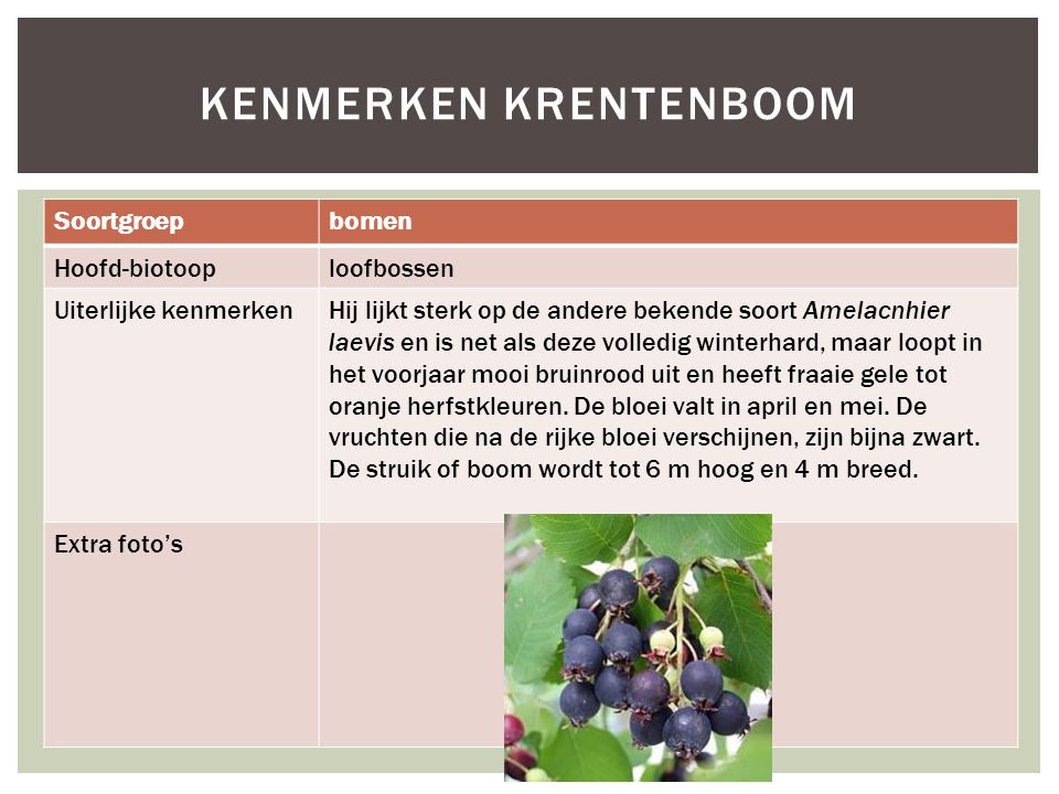 Kenmerken Krentenboom