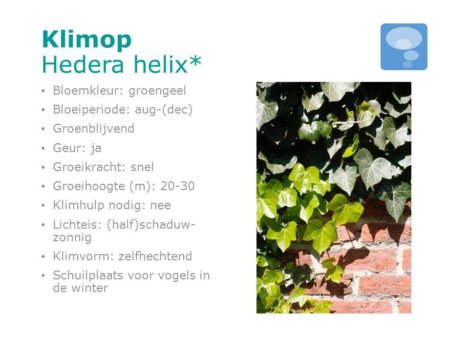 Klimop Hedera helix* Bloemkleur: groengeel Bloeiperiode: aug-(dec)