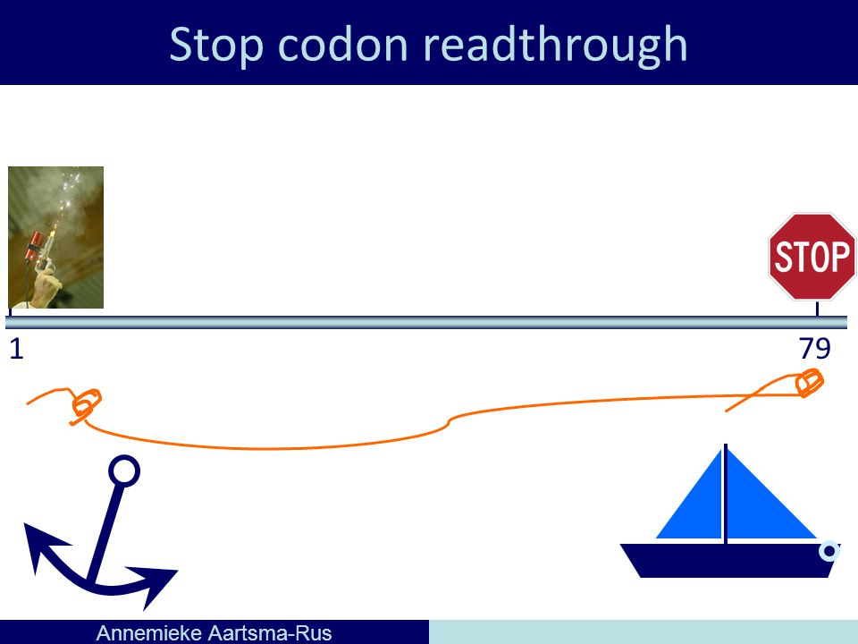 Stop codon readthrough