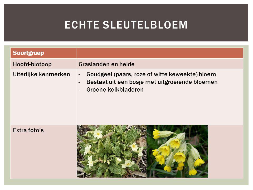 Echte sleutelbloem Soortgroep Hoofd-biotoop Graslanden en heide