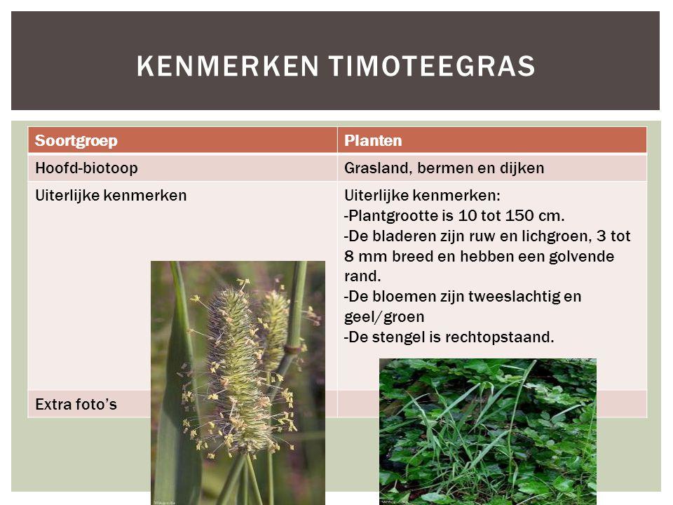 Kenmerken tIMOTEEGRAS