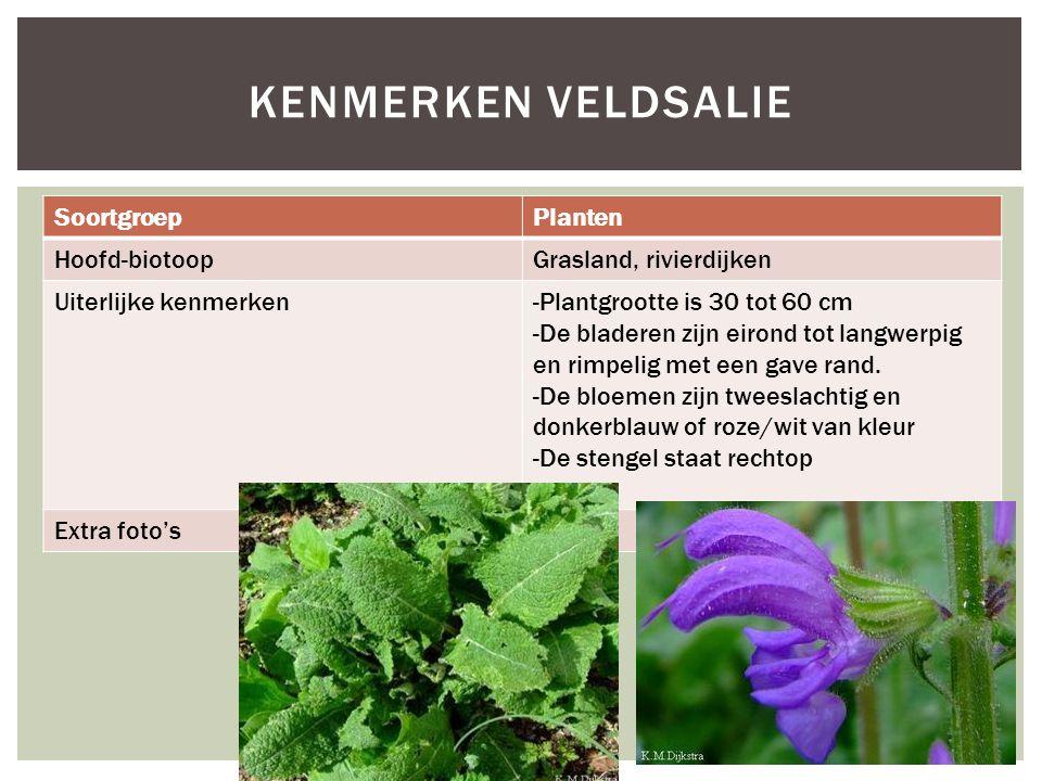 Kenmerken Veldsalie Soortgroep Planten Hoofd-biotoop