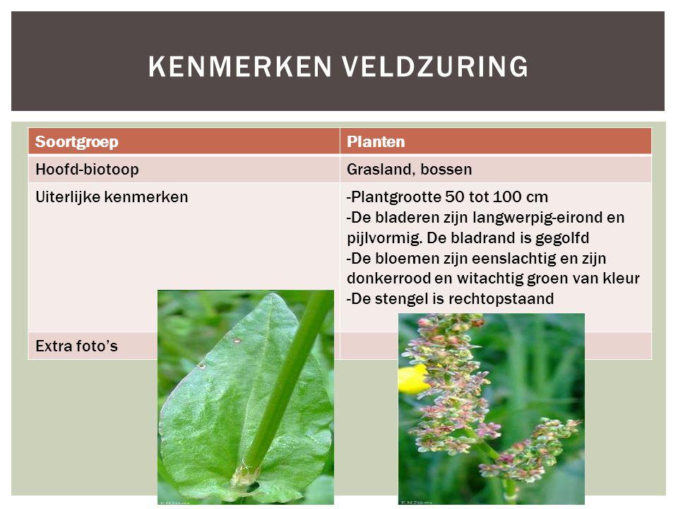 Kenmerken veldzuring Soortgroep Planten Hoofd-biotoop Grasland, bossen