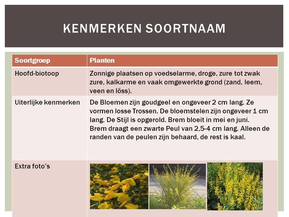 Kenmerken soortnaam Soortgroep Planten Hoofd-biotoop