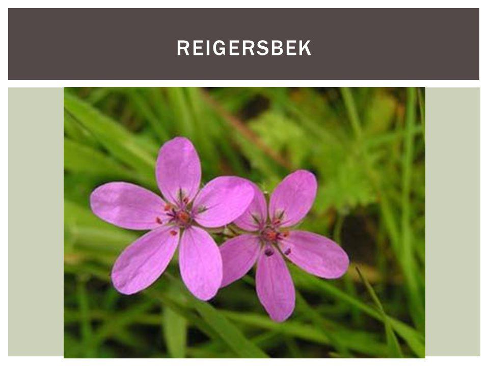 Reigersbek